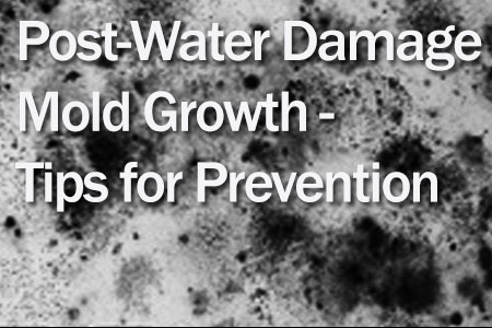 Post Water Damage Mold Growth – Tips on Prevention